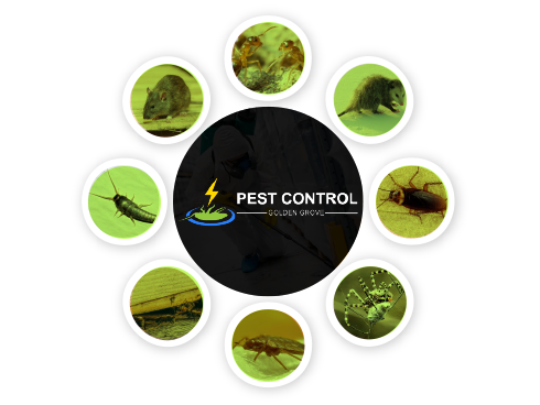 Pest Control Golden Grove